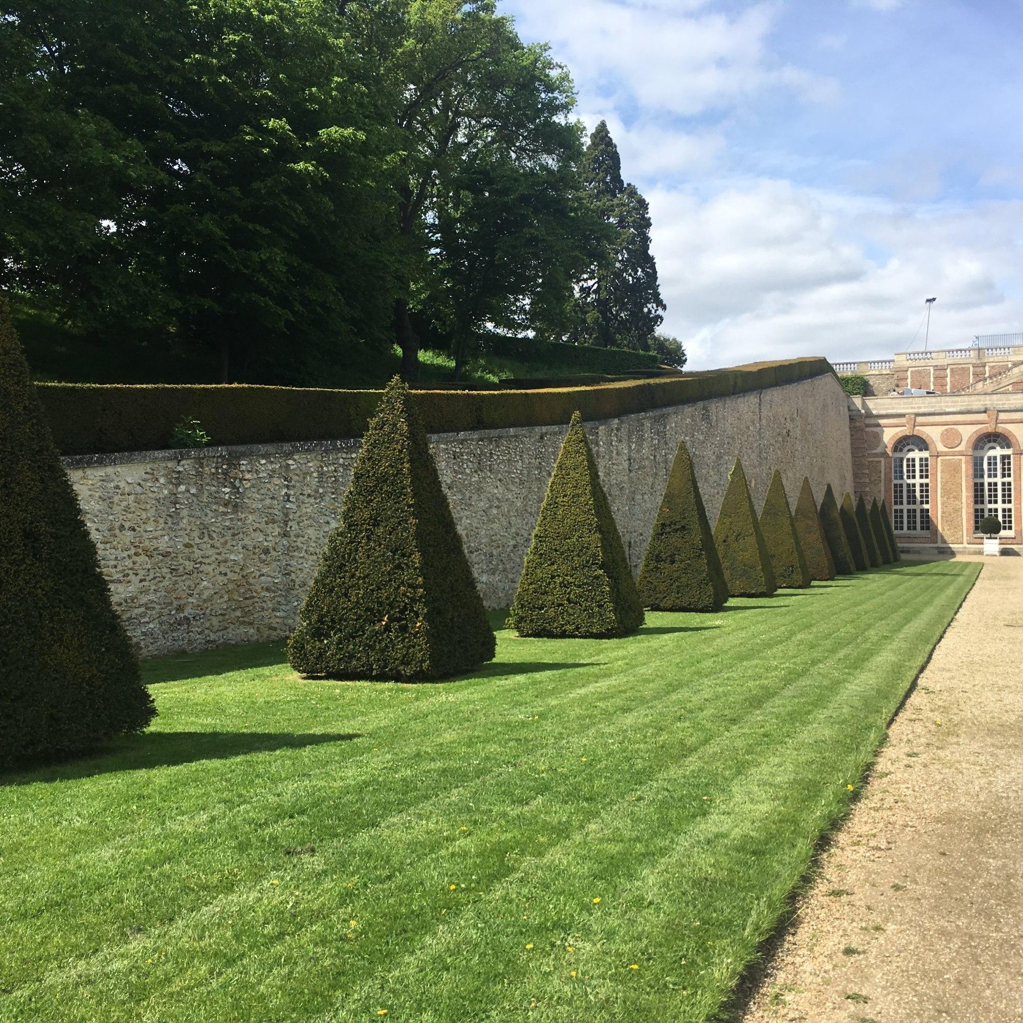 green pyramid trees in garden